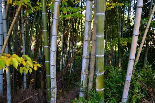 Bamboo Garden 4