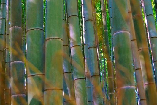 Bamboo Garden 5